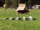 Grazie v. Talka Marda Utility Dog Excellent long jump