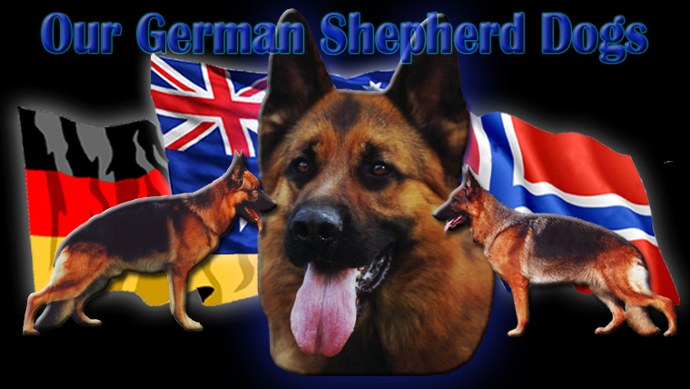 Nordenstamm_German_Shepherds