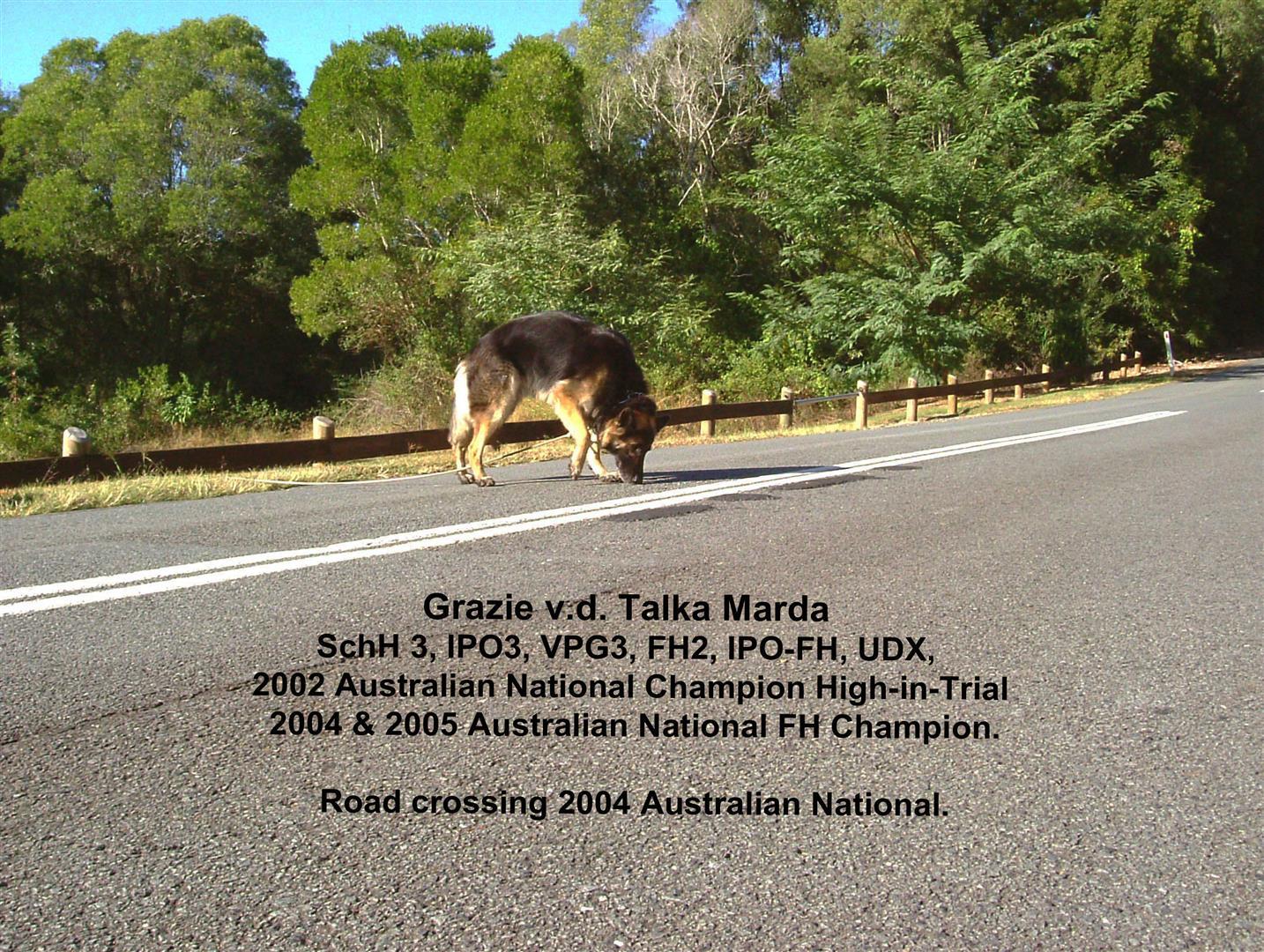 Grazie v.d. Talka Marda_National_Champion_Australia
