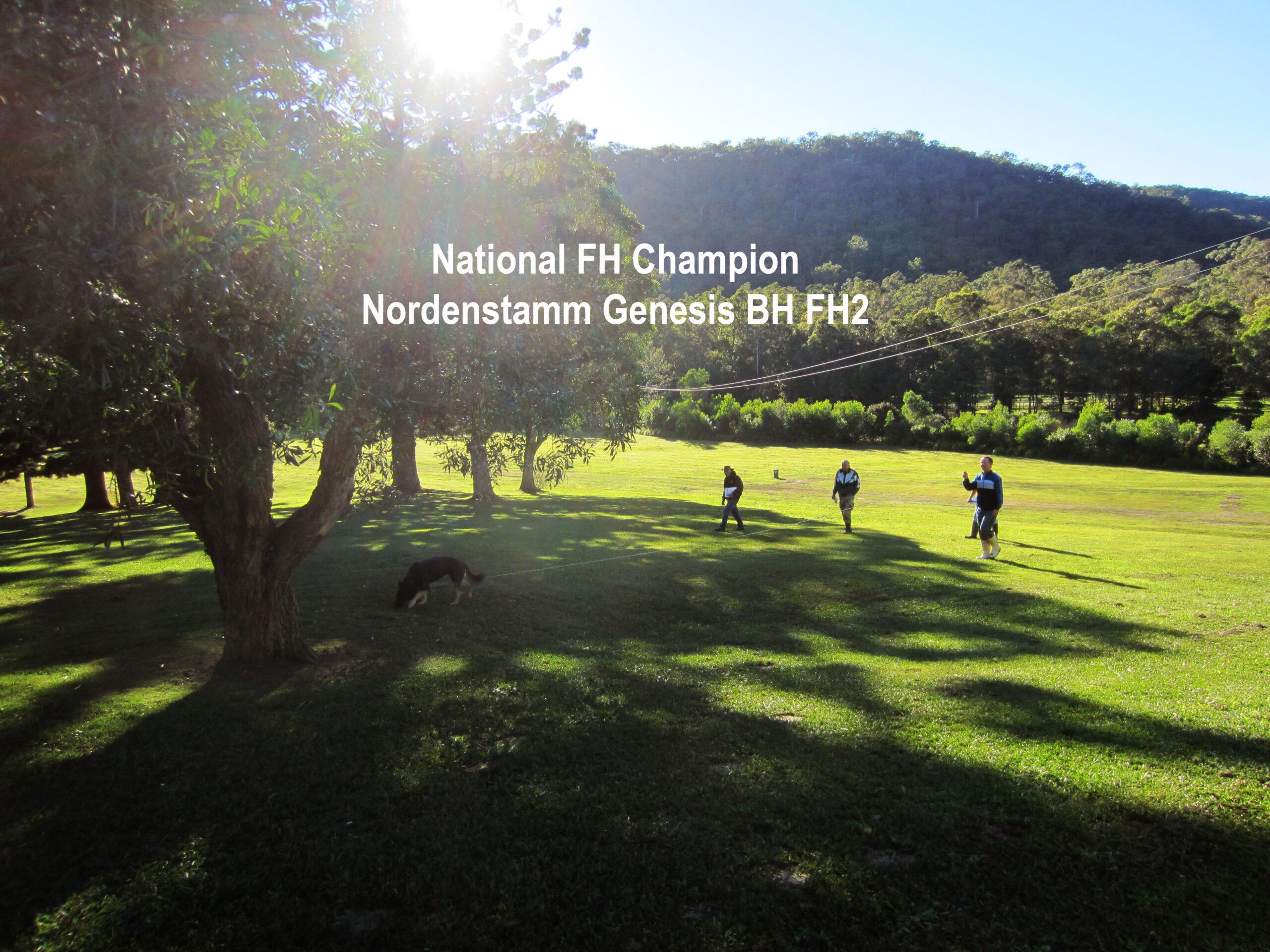 Nordenstamm_Genesis_GSD_National_Champion