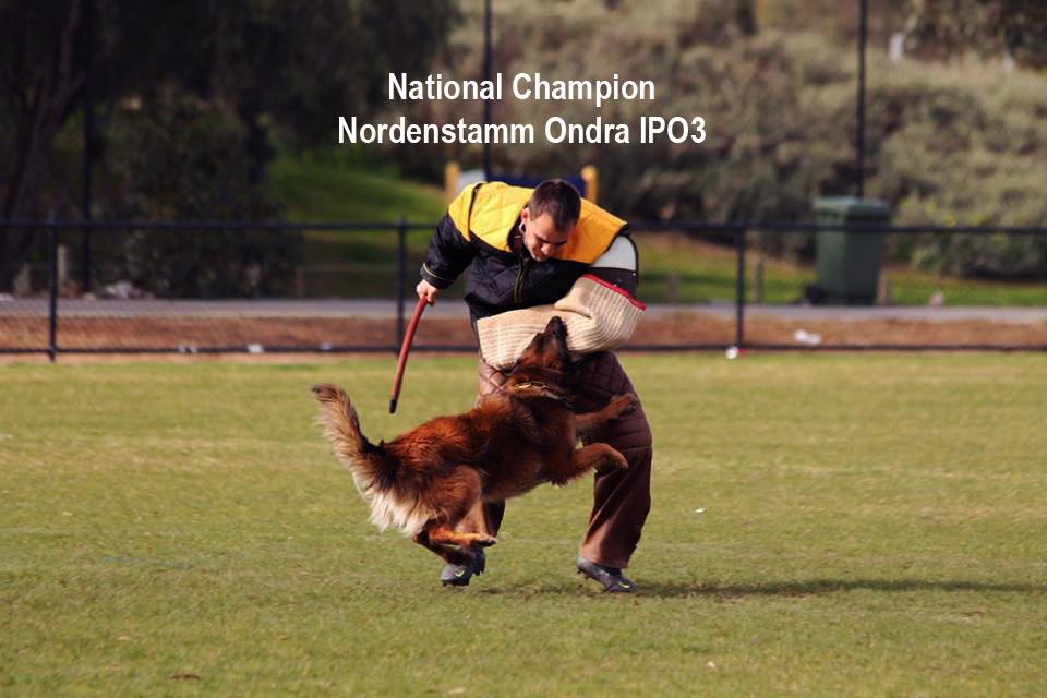 Nordenstamm_Ondra_National_Champion_IPO