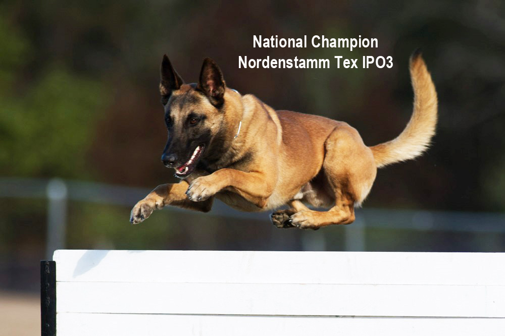 Nordenstamm_Tex_National_Champion_IPO
