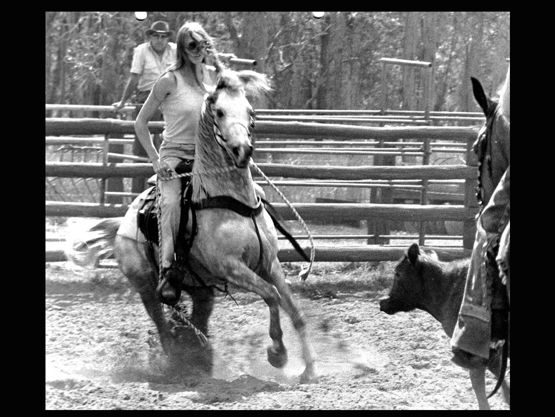 Alison Kollenberg_Arabian_horses-cutting