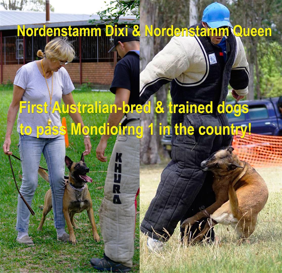 nordenstamm_1st_mondiorin_1_dogs